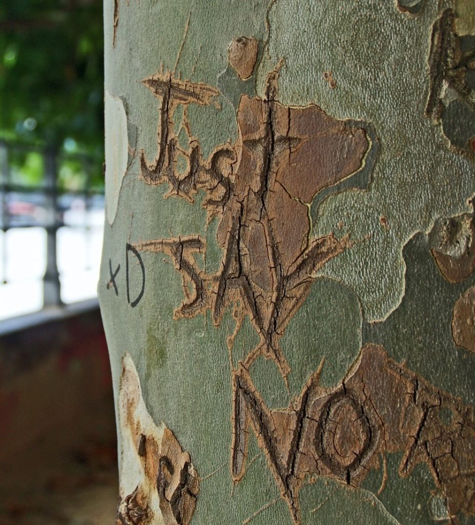 "Image of try with the phrase ""Just say no"" carved on it"